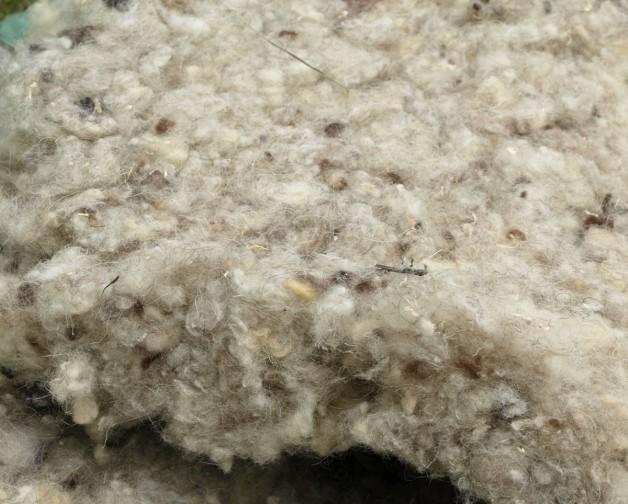 Lana de oveja